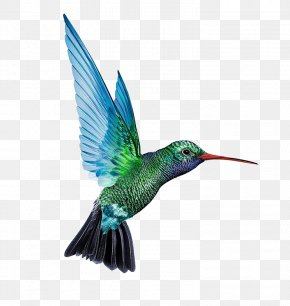 Blue And Green Food Hummingbirds - Denmark Battery Charger Baterie Externu0103 Solar Cell PNG
