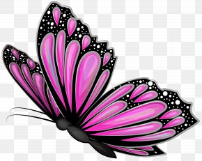 Pink Butterfly Transparent Clip Art Image - Butterfly Pink Clip Art PNG