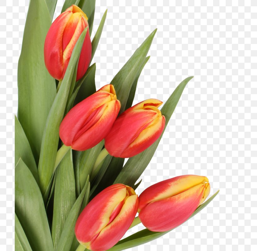 Mother's Day Flower Bouquet Tulip, PNG, 726x800px, Mother S Day, Bud, Child, Christmas, Cut Flowers Download Free