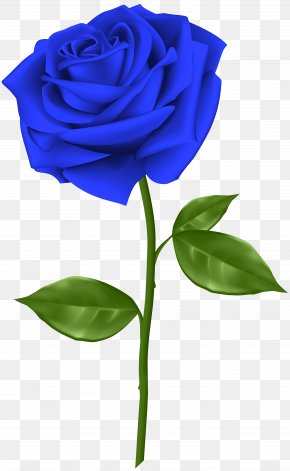 Blue Rose Transparent Clip Art - Blue Rose Flower Clip Art PNG