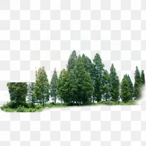 Forest - Tree Forest Green PNG