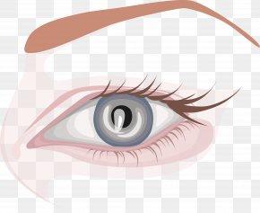 Long Eyelashes Eye Chart - Eyebrow Eyelash Extensions Human Eye PNG