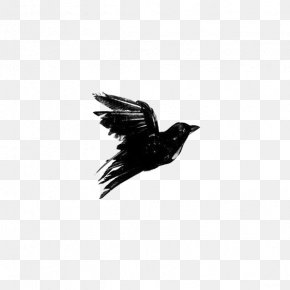 Crow - Crows Black And White Blackbird PNG