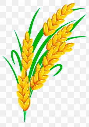 Golden Rice - Rice Euclidean Vector PNG