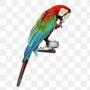 Domesticated Pet Parrot - Cockatiel Bird True Parrot Dog Cat PNG
