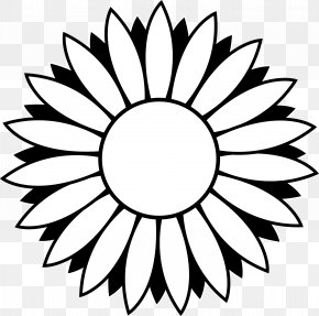 Flower Outline Images - Black And White Common Sunflower Clip Art PNG