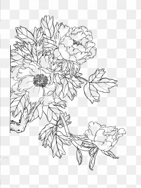 Peony Artwork Line Drawing - Moutan Peony Download Floral Design PNG