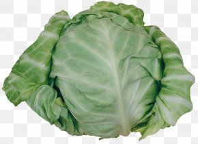 Cabbage - Savoy Cabbage Cruciferous Vegetables Spinach PNG