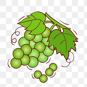 Crystal Grapes - Grape Wine Shine Muscat Fruit Illustration PNG