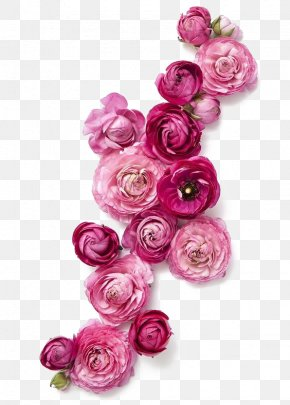 Red Roses - Flower Clothing Fashion Pink PNG