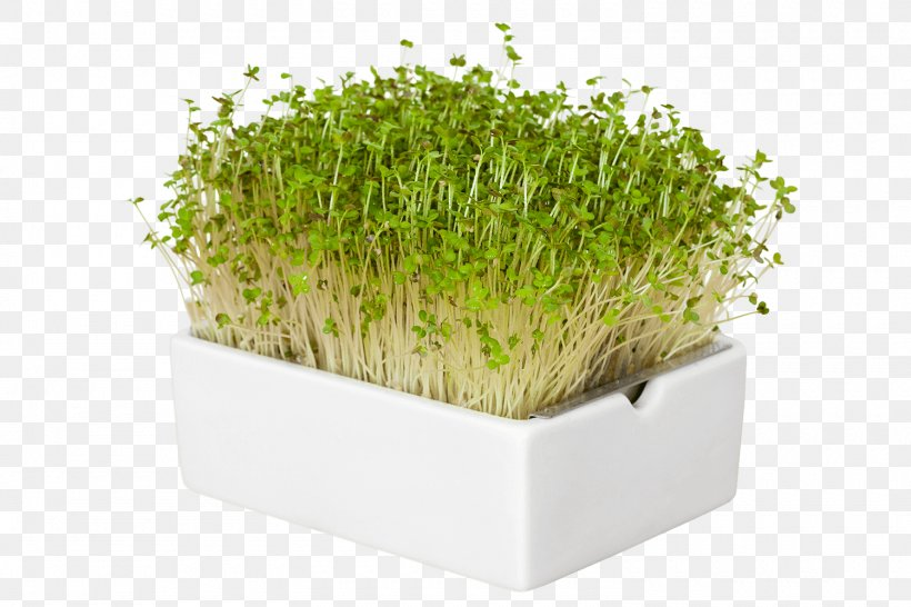 Flowerpot Herb Microgreen Industrial Design Garden, PNG, 1500x1000px, Flowerpot, Garden, Grass, Grass Family, Grasses Download Free