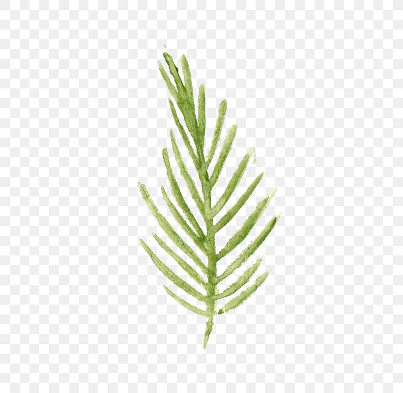 Leaf Watercolor Painting, PNG, 800x800px, Leaf, Dawn Redwood, Fern, Grass, Grass Family Download Free