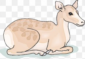 Tail Fawn - Clip Art Cartoon Wildlife Animal Figure Terrestrial Animal PNG