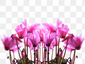 Mother's Day - Mother's Day Gift Child Flower PNG
