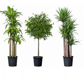 Pot Leaf - Flowerpot Houseplant Garden Rock PNG