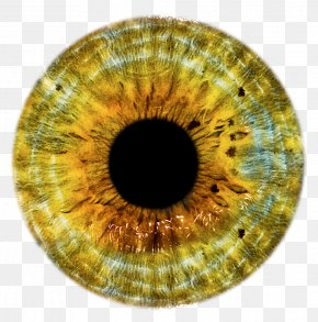 Eyes - Eye Lens Clip Art PNG