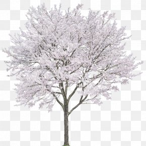 Cherry Trees - Android Photography Computer File PNG