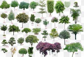 Tree Top View - Tree Download Shrub PNG