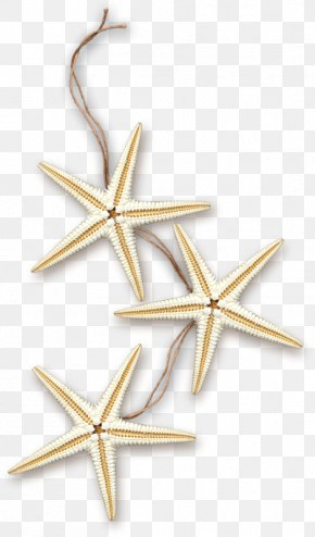 Starfish - Starfish Sea Marine Clip Art PNG