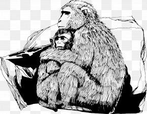 Monkey - Primate Ape Rhesus Macaque Monkey Gorilla PNG