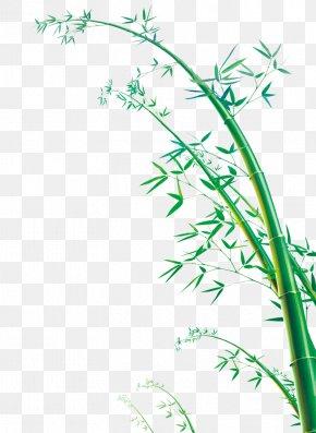 Bamboo - Bamboo Euclidean Vector PNG