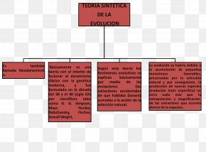 Map - Introduction To Evolution Concept Map Biology PNG