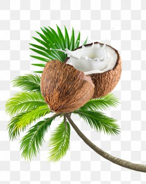 Coconut Tree Fruit PNG