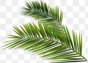 Vector Hand-painted Palm Leaf - Trachycarpus Fortunei Vector Building Arecaceae Euclidean Vector PNG