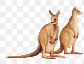 Cute Kangaroo PNG
