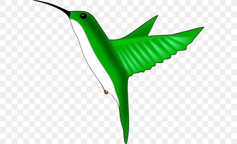 Hummingbird Clip Art, PNG, 594x499px, Hummingbird, Beak, Bird, Drawing, Fauna Download Free
