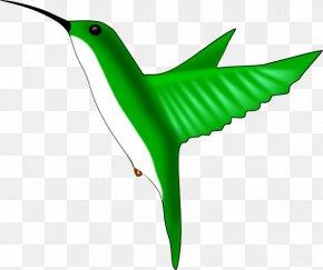Free Hummingbird Clipart - Hummingbird Clip Art PNG