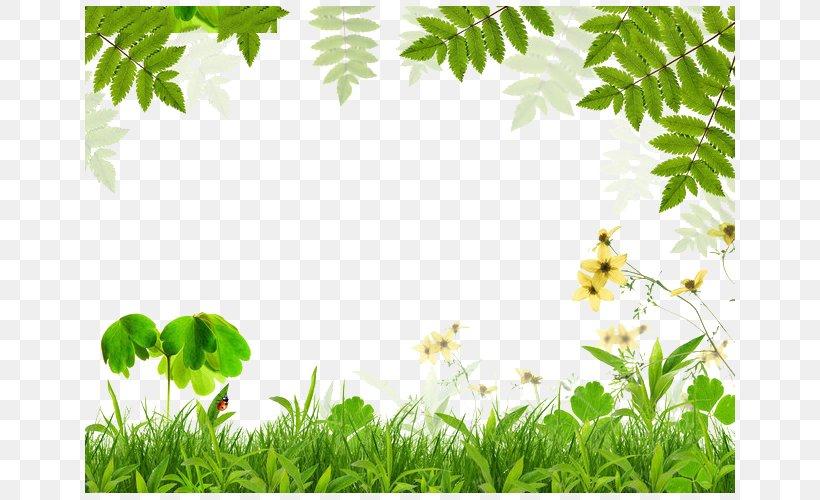 Spring Green Leaf Film Frame, PNG, 650x500px, Green, Branch, Color ...