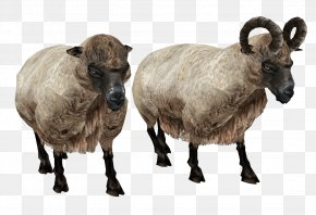 Sheep Image - Welsh Mountain Sheep Icon PNG