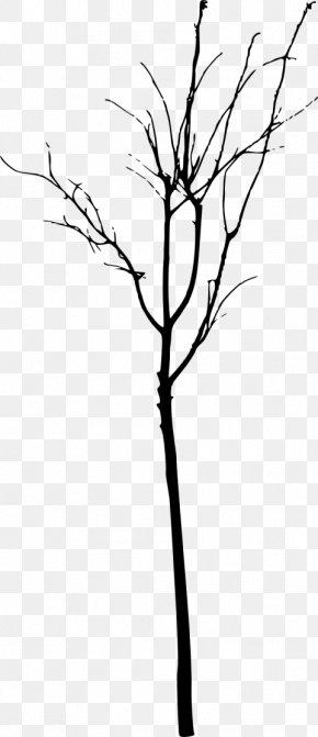 Tree - Twig Tree Branch Clip Art PNG