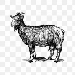 Goat Vector - Sheep Goat Cattle Zeus Caprinae PNG