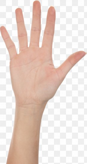 Joints Of Hand Images Joints Of Hand Transparent Png Free Download Joints of hand thumb signal tallahassee fitness and food festival child homo sapiens, others png. joints of hand transparent png