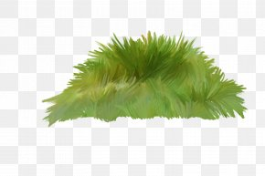 Grass Transparency And Translucency - Clip Art Illustration Photography PNG