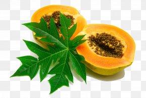 Papaya Extract Images, Papaya Extract Transparent PNG, Free download