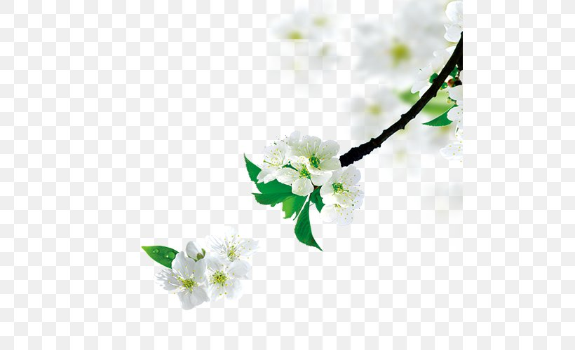 Tree Branch, PNG, 500x500px, Tree, Blossom, Branch, Cosmetics, Diffuser Download Free