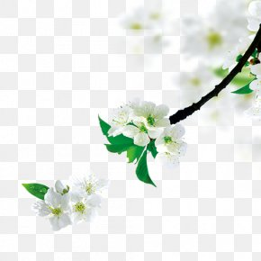 Pear Tree Branch - Tree Branch PNG