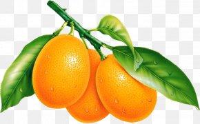 Orange - Fruit Desktop Wallpaper Orange Tangerine PNG