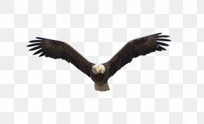 Flying Eagle - Benton Lake National Wildlife Refuge Bald Eagle Flight Bird PNG