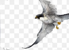 Eagle Wings - Bird Watercolor Painting Drawing Work Of Art PNG