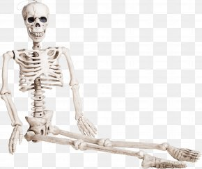 Seated Skeleton - Human Skeleton Bone Homo Sapiens PNG