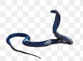 Snake - Snake King Cobra Clip Art PNG