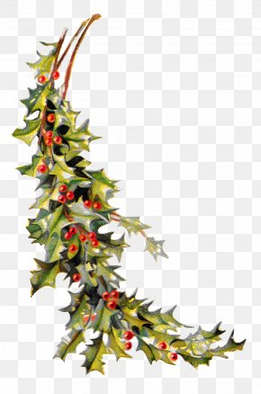 HOLLY - Christmas Ornament Common Holly Clip Art PNG