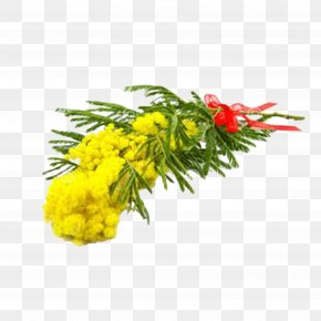 Mimosa Flower Bouquet - Acacia Dealbata Royalty-free Photography Flower PNG