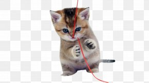 Naughty Kitten - Cat Kitten Dog Cuteness Puppy PNG