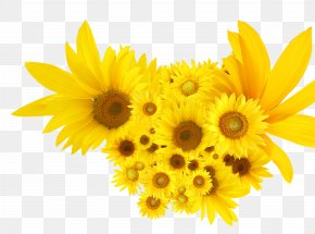 Yellow Sunflowers - Common Sunflower Calendula Officinalis Seed PNG