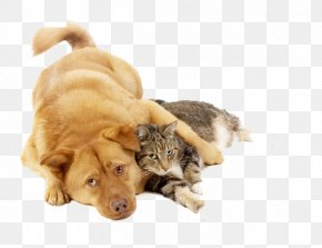 Dog Holding Cat - Cat Food Kitten Puppy Dog PNG